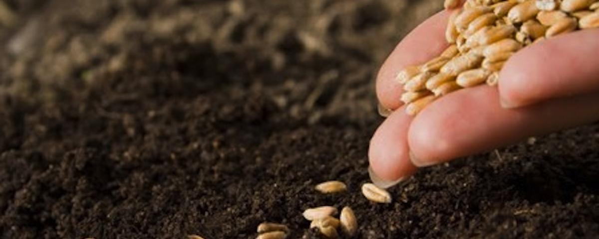 pode parecer apenas uma semente